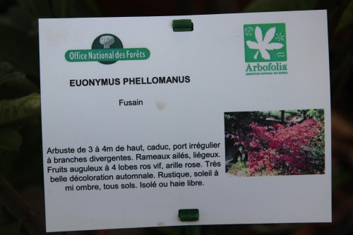 1 euo phellomanus barres 12 oct 2013 005 (2).jpg