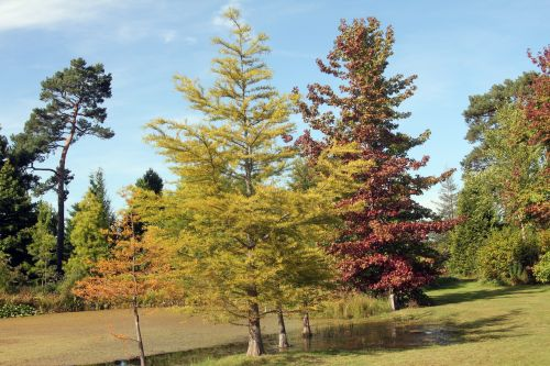 1 taxodium gb 16 sept 2012 206.jpg