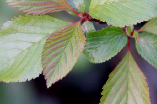 4 vib farreri nana veneux 6 avril 2012 009 (1).jpg