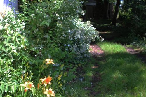 5 rosa mulliganii veneux 24 juin 2016 004.jpg