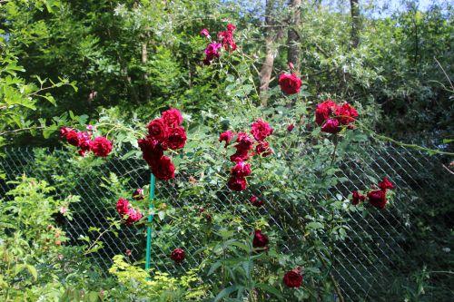 red parfum romi 8juin 2014 024.jpg