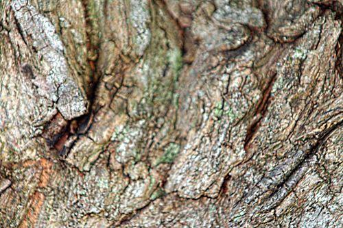 melia écorce paris 10 oct 2010 p 088.jpg