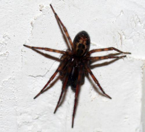 araignée 3 dec 002.jpg