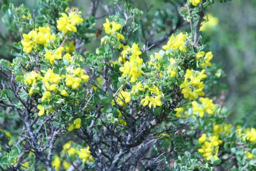 coronilla paris 23 mars 103.jpg