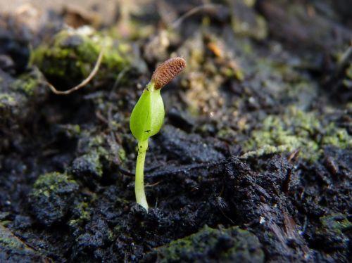 germination 1.jpg