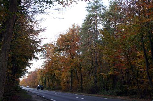 forêts 26 oct 008.jpg