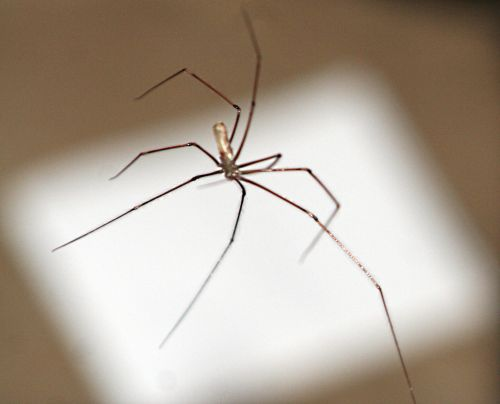 araignée pp 19 sept 002.jpg