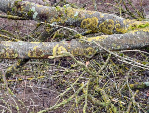 lichen romilly 23 fev 022.jpg
