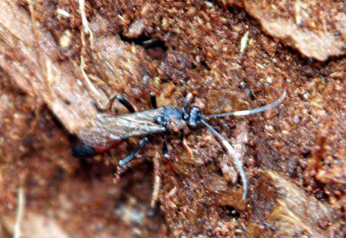 insecte bois p romi 22 février 031.jpg