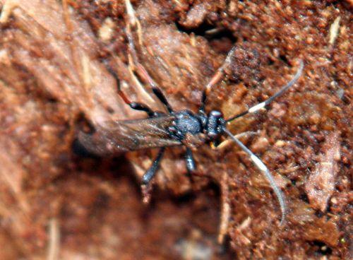 insecte bois p romi 22 février 028.jpg
