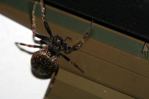 araignée veneux 16 mars 057.jpg