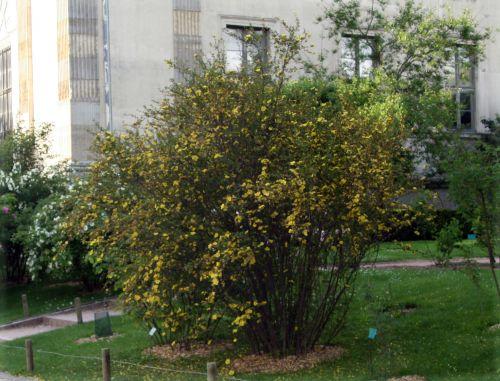 golden chers entier 27 avril 096.jpg