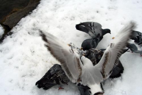 oiseaux neige 21 dec 038.jpg