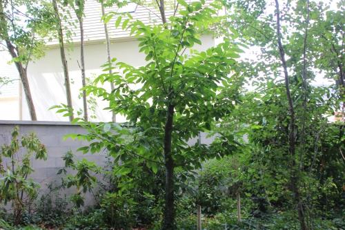 castanea veneux 30 juil 2016 002.jpg