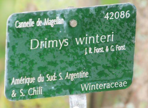 drimys 5 paris 21 janv 2012 008.jpg