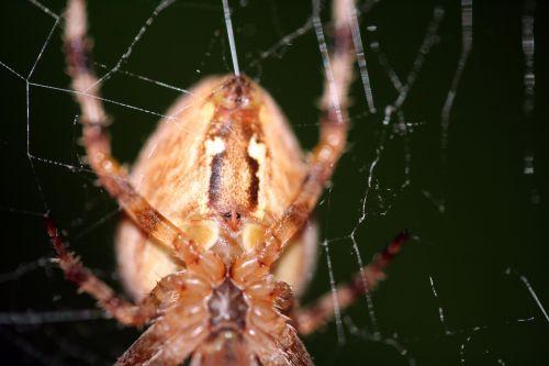 araignée fil 21 oct 025.jpg