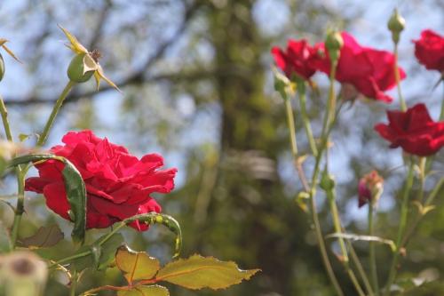 3 red parfum romi 6 sept 2015 011 (4).jpg