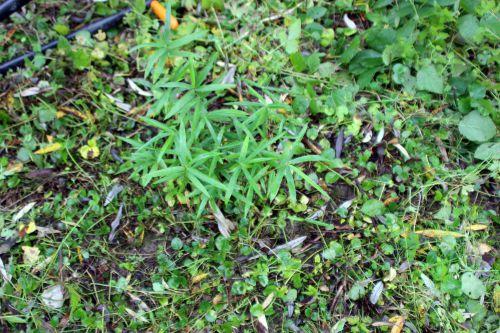 bambou romi 21 oct 2013 020.jpg