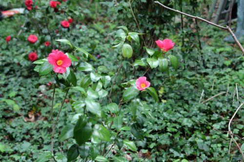 spring promise 1 romi 29 avril 2013 025.jpg