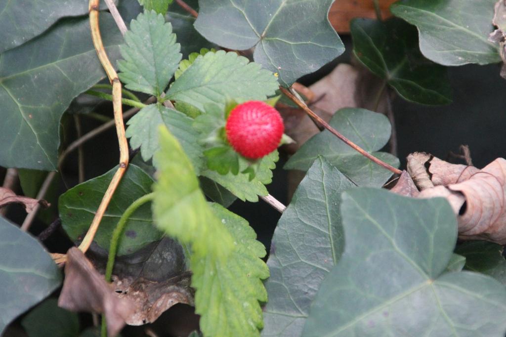 Visite du jardin la suite sureaux for Jardin wiktionnaire