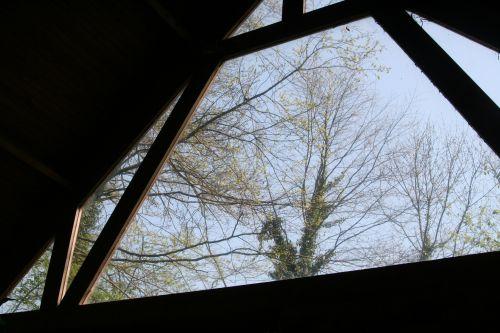 vitre geai 18 avril 002.jpg