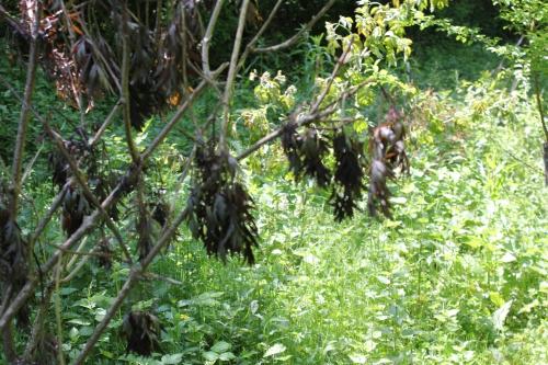 4 black lace romi 27 mai 016.jpg
