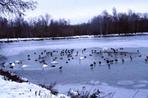 oiseaux neige 21 dec 002.jpg