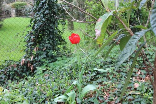 10 tulipe veneux 15 avril 2016 040.jpg