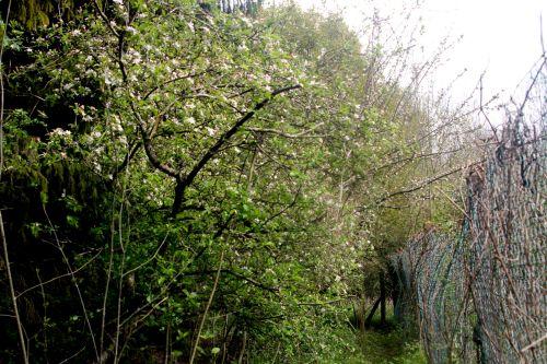 14 romi 24 avril 2012 009.jpg