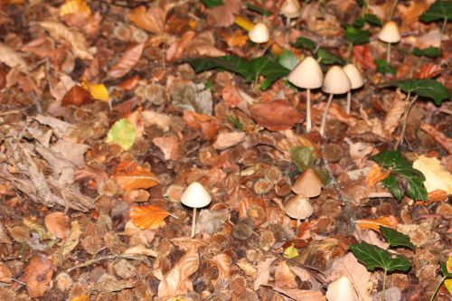 champignons 12 oct 2014 001 (1).jpg