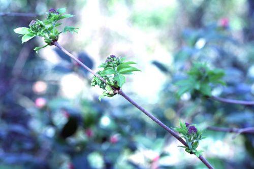 kamtcha branche veneux 22 mars 031.jpg