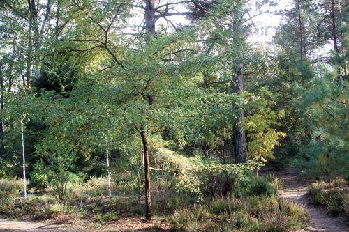 1 ulmus parvifolia gb 21 oct 2012 191 (5).jpg