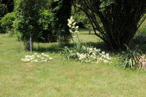 1 yucca aloifolia barres 27 juillet 2013 025.jpg