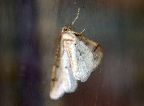 papillon veneux 18 fev 2014 022.jpg
