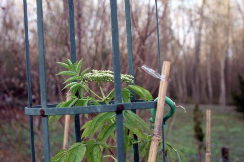 hookeri romi 6 déc 2012 003.jpg