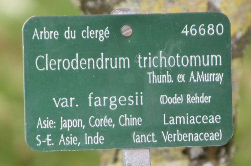 clerodendrum trichotomum paris 21 juil 2012 060 (8).jpg
