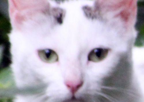 4 chat yeux romi 27juil 2014 030 (3).jpg