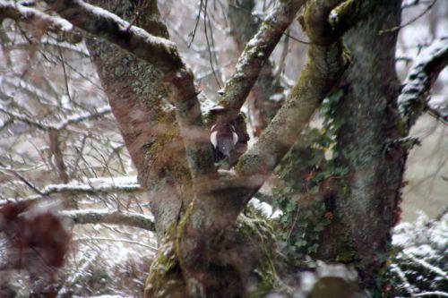 neige pie 20 février 007.jpg
