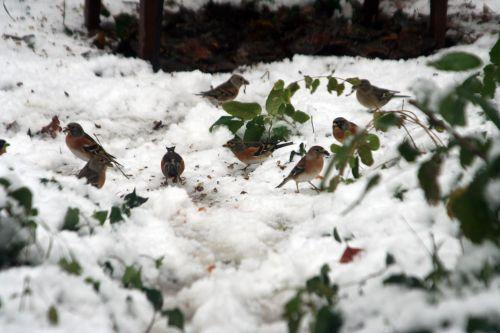 oiseaux sol 19 déc 2010 042.jpg