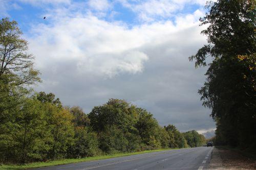 1 forêt 2 nov 2013 005.jpg