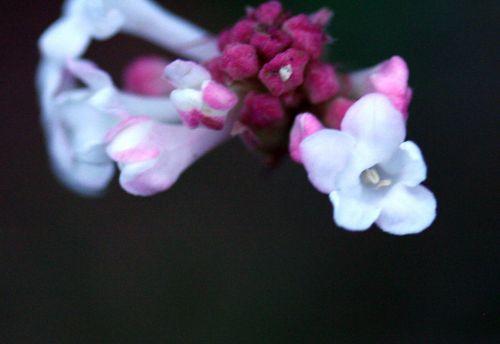 vib far fleurs 22 dec 015.jpg