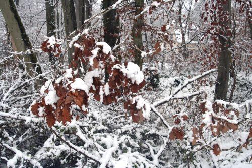 neiges chêne 20 déc 2010 086.jpg