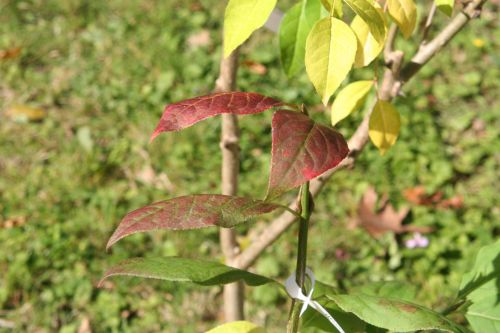 euo pla arbofolia 9 oct 2010 008.jpg