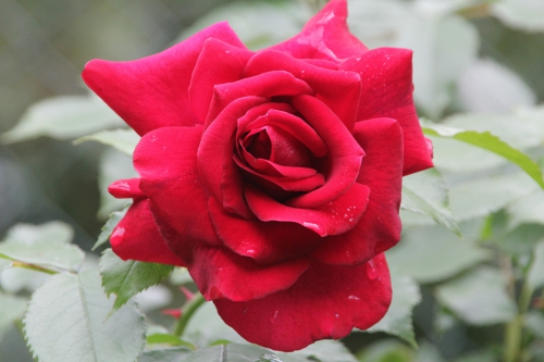 12 red parfum romi 29 mai 2015 019.jpg