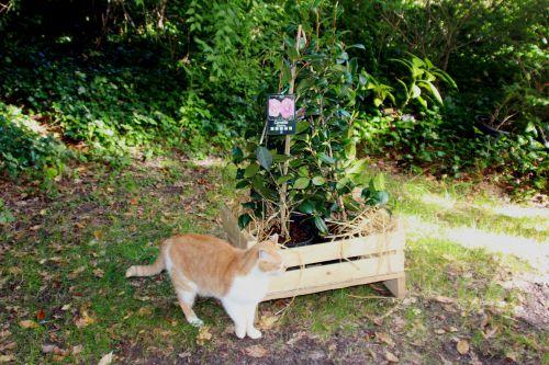 3 camellia 16 sept 2013 003.jpg