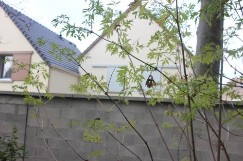 7q nigra laciniata veneux 14 nov 2016 016.jpg