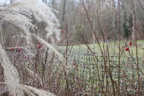 5 rosa nitida romi 2 fev 2017 005.jpg
