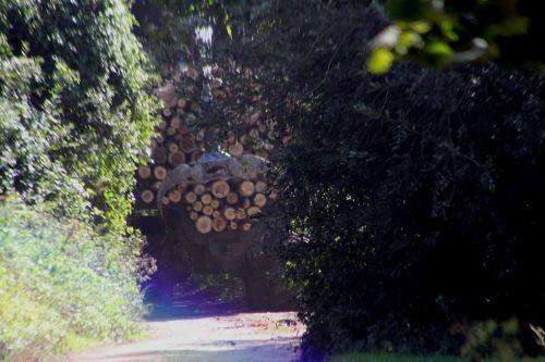 t1 romi 14 sept 2011 016.jpg