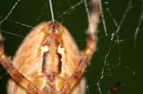 araignée fil 21 oct 026.jpg