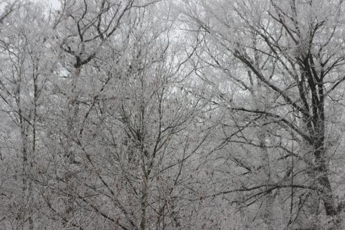 7 givre forêt veneux 1 janvier 006 (3).jpg